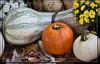 Gourds & Mums (I) (gtncats) Tags: flowers food nature gourds outdoors pumpkins mums canon70d photographyforrecreation
