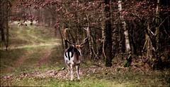 Hirsche gesehen.