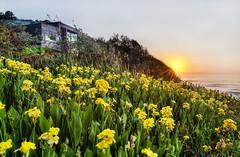 A Nice Time to Reflect (on3legs) Tags: beach head australian australia locations bungan