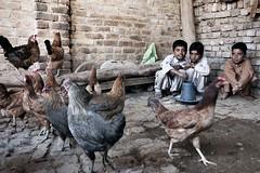 Kamran, 7 anni, Shehryar, 11 anni e Shahan, 9 anni