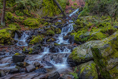 Starvation Creek, Columbia River Gorge