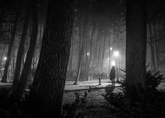 A Woman in Winter (DMac 5D Mark II) Tags: trees winter people bw woman snow silhouette night contrast dark evening mood shadows bright atmosphere perfectmoment southkorea jeju winterscape
