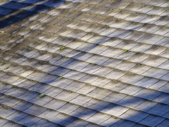 PC150003 (Paul Henegan) Tags: autumn rooftop morninglight frost shadows lichen