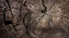 Naturaleza viva (arturomontes) Tags: espaa naturaleza tree verde nature arbol andaluca tronco alcaldelosgazules parquealcornocales