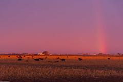 Farm Sunrise (wacamerabuff) Tags: sunrise washington farm