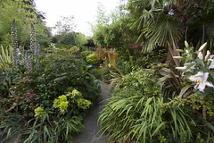 Pagoda path in summer (July 30th) (Four Seasons Garden) Tags: uk summer england west english garden four golden seasons bears july bamboo oriental acanthus midland walsall asiatic ngs mollis breeches fourseasonsgarden