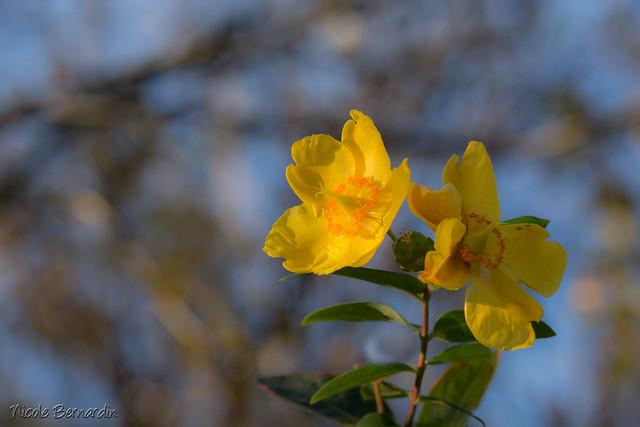 Solstice dhiver au jardin Lecoq