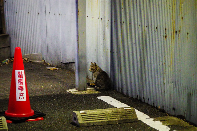 Today's Cat@2014-12-22