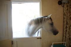 DSC04743 (HerryB) Tags: africa ranch horse cheval lodge afrika pferd afrique heribert enjo bechen httpwww soulcountryinfo httpwwwbelairfotoscom httpwwwsoulcountryinfo