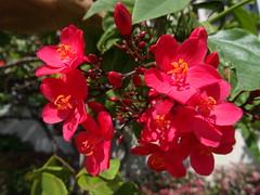To brighten up your day (peggyhr) Tags: flowers hawaii thegalaxy peggyhr dsc05056 floraaroundtheworld thegalaxyhalloffame ourwonderfulandfragileworld