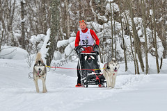 _DSC8496 copia (JoanEnric) Tags: dog musher mushing sled sleddog traineau valgaudemar valgaude valgaudetraineau