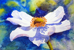 White flower, anemone 02, by hj - DSC08697 (Dona Mincia) Tags: flower art watercolor painting paper arte flor inspired study tribute homage pintura aquarela inspirado whiteanemone rereading relecture annmortimer anmonabranca homenagemreleitura