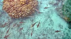 reef Hotel KIAORA Tahiti Rangiroa2 (sapphire_rouge) Tags: france resort lagoon tahiti atoll rangiroa polynesia snorkeling  franchpolynesia    atool polynsiefranaise