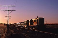 Approaching the junction (Bingley Hall) Tags: train diesel transport grain engine rail railway anr an transportation locomotive southaustralia freight sar glint alco 836 australiannational dl531 apamurra 251b aegoodwin monartosouth rpausa830 railpage:class=33 rpausa830836 railpage:livery=56 railpage:loco=836