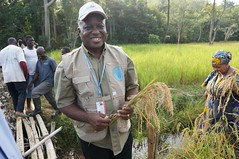 Launch of the harvest (FAOemergencies) Tags: africa rice farmers liberia fao ebola emergencies ruralcommunities ebolaoutbreak