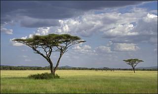 serengeti 1 f1