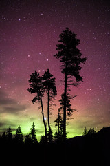 Northern Lights Near D'Arcy, B.C. (P.A.B.) Tags: trees canada night stars whistler britishcolumbia nightsky darcy northernlights auroraborealis highiso nikond800e nikonnikkor2470mmf28afsged