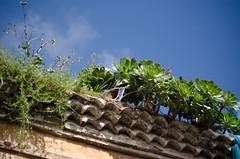 T. Tejados con verodes (inma F) Tags: casa calle flor edificio tejado lalaguna verode