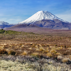 Mount Ngauruhoe (Ed Kruger) Tags: park travel blue winter newzealand sky plants sun mountain snow flower tree green grass sunshine clouds forest landscape early bush desert wildlife sunny nz northisland kiwi aotearoa ngauruhoe flowersplants mountngauruhoe edkruger abaconda qfse