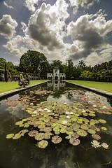 Bodnant Gardens (ianandbarbara.bonnell@btinternet.com) Tags: uk flowers sky plants lake nature water floral beauty gardens wales pond natural serene waterlillies northwales ornamentalpond