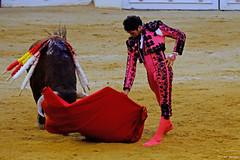 Cayetano, Alicante (Fotomondeo) Tags: toro toros plazadetoros corridadetoros torero matador bull bullfight bullfighter alicante alacant valencia espaa spain fujifilmxm1 cayetano