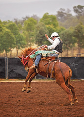 cowboy (goodgirlbetty) Tags: horses cowboy working australia riding saddle bronc stockman