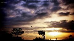 la mia Africa #2 (Angelo Trapani) Tags: palermo sicilia alba cntroluce africa paesaggio mare luce colori sunrise sea