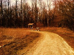 The Lonely Swing (blakeenustun) Tags: sky sticks hut swing bench walkingtrail walking trail forest ground dirt trees outdoors side out outside art picture pic photograph photo nature