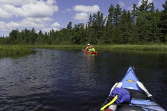 Paddling through the bog (Gumball Photography) Tags: algonquin kayaking backcountry ontario camping canada pristine