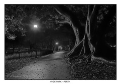 Hyde Park Night (JChipchase) Tags: park hydepark perth australia trees night nikon d750 ficusmacrophylla moretonbayfig