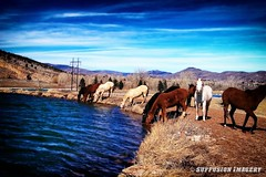 03-04-2007_12.34.59--Canon--30D-68-device-2000-wm (iSuffusion) Tags: canon30d colorado loveland sylvandaleranch ef28105mm fishing horses mountains wildhorses unitedstates us