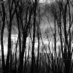 Trees In Water 095 (noahbw) Tags: captaindanielwrightwoods d5000 desplainesriver nikon abstract blackwhite blackandwhite blur branches bw clouds forest landscape monochrome natural noahbw reflection river sky square trees water winter woods