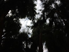 ''lost in the leaves with you'' (Gii Kurt) Tags: amor chile cielo minimalismo clave baja