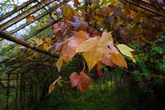 Forladt drivhus (dborup) Tags: leaf blad sel1635z sonya7ii greenhouse abandoned drivhus forladt