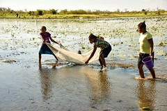 Little Fish (Rod Waddington) Tags: africa african afrika afrique madagascar malagasy tribe traditional tribal fishing net three girls water rice field paddy hyacinth bucket