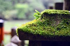 Fushimi Inari Taisha () (pedro smithson) Tags: pedrosmithson japan nikon nippon kyoto kytoshi asia travel d5100 temple shrine sun light shadow fushimi inari orange black green moss leafs humid moist