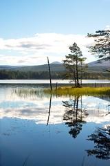 faileasan (Senaid) Tags: boatofgarten nethybridge loch reflection strathspey pinewoods highlands ancient pine trees osprey birds freshwaterloch scottish scotland nikon d600 dubhard