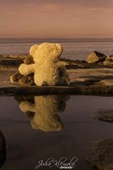 -Paluu tulevaisuuteen- (IceDevil90) Tags: 700d autumn canon fall finland forest kokkola suomi sunset sky teddy teddybear sea ocean