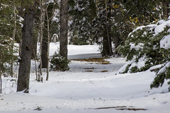 Snow covered trails, Thanksgiving weekend, Waskesiu, Prince Albert National Park (Jim 03) Tags: snowfall waskesiu thanksgiving weekend prince albert national park 2016 squall trails marina jim03 jimhoffman jhoffman jim wwwjimahoffmancom wwwflickrcomphotosjhoffman2013