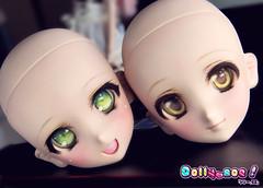 FS Dollfie Dream Heads (Dollymoe) Tags: dollfiedream dollfie bjd dream anime ddh06 animedoll volks ドルフィードリーム