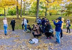 Behind The Scenes ((Jessica)) Tags: bostonportraitmeet autumn portraitmeet foliage seasonal massachusetts seasons trees portrait boston fall arboretum arnoldarboretum newengland photographers leaves