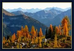 North Cascades National Park: Larch (edenseekr) Tags: trees gold nationalpark washingtonstate larch mountians northcascades enteredinsybcontest