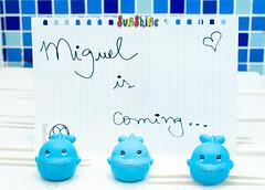 Miguel is coming (claudio.tomaz) Tags: copa futebol bélgica coréia jogodacopa worldcup2014 copadomundo2014 arenaitaquera bélgicaxcoréia