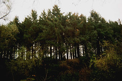 Verdant (d.mmack) Tags: trees st triangle andrews forestry braes lade