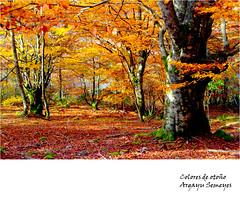 Colores de otoo (Argayu) Tags: raw bosque otoo asturies teverga seronda fagussilvatica vosplusbellesphotos fayeu parquenaturaldelasubias