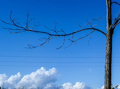 DSC_0074 (mauro.valenti) Tags: blue sky cloud tree nikon nuvole cielo albero azzurro d5100