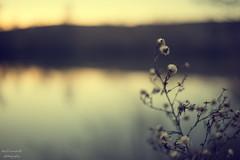 slow down (Axel Ku.) Tags: sunset 35mm river germany bayern deutschland bavaria main franken wrzburg softtones f20 frankonia unterfranken rivermain flussufer primelens canonef35mmf20 canoneos5dmarkiii