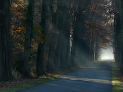 The road (joeke pieters) Tags: road trees holland netherlands oak eiken bomen nederland sunrays sunbeams achterhoek winterswijk weg gelderland zonnestralen woold platinumheartaward panasonicdmcfz150 1190487