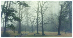 Parks and Recs (BillyBPhotos) Tags: morning trees atlanta fog georgia point 50mm parks east recreation monday