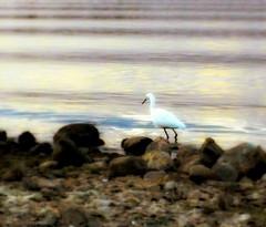 lake bird shore